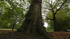 Trees in a Green Park in London Stock Footage