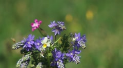 Bouquet Of Violet Flowers - stock footage