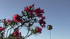 Oleander plant with bird house in back ground Stock Footage
