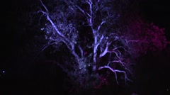 Tree with light changing colors timelapse Stock Footage