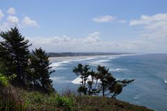 Windblown trees on sandy hillside - stock photo