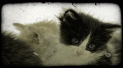 Three kittens together. Vintage stylized video clip. Stock Footage