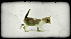 Kittens walk. Vintage stylized video clip. Stock Footage