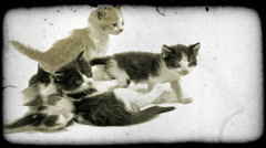 Kittens play. Vintage stylized video clip. Stock Footage