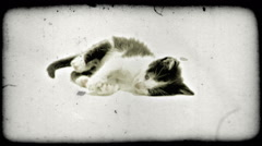 Kitten plays. Vintage stylized video clip. Stock Footage
