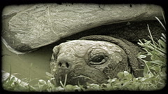Turtle head. Vintage stylized video clip. Stock Footage