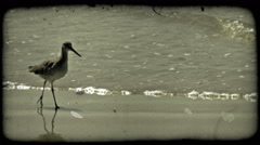 Bird walks along shore. Vintage stylized video clip. Stock Footage