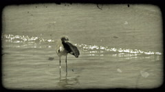 Bird preens on shore. Vintage stylized video clip. Stock Footage