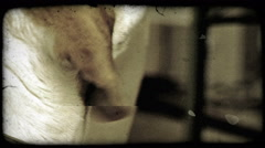 Puppy Head. Vintage stylized video clip. Stock Footage