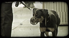 Muzzled Puppy. Vintage stylized video clip. Stock Footage
