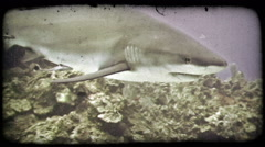 Shark swims by reef. Vintage stylized video clip. Stock Footage
