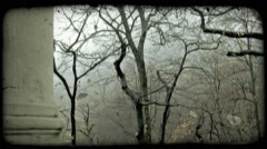 Stock Video Footage of Barren Tree. Vintage stylized video clip.