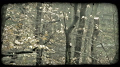 Autumn Leaves 1. Vintage stylized video clip. Stock Footage