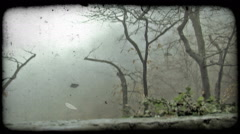 Small, bare trees and mist. Vintage stylized video clip. Stock Footage