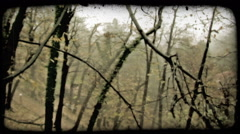 Forest Building 7. Vintage stylized video clip. Stock Footage