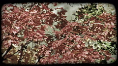Colorful autumn leaves. Vintage stylized video clip. Stock Footage