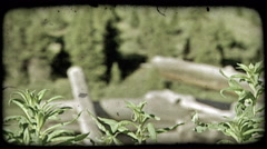 Old mountain fence and plants. Vintage stylized video clip. Stock Footage