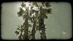 Footage rising up level with top of palm tree. Vintage stylized video clip. Stock Footage