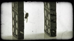 Close-up shot of a fly crawling over some dominoes in line. Vintage stylized Stock Footage