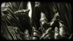 Extreme close-up of licorice sticks. Vintage stylized video clip. Stock Footage
