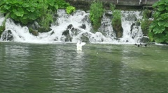 White duck in the lake and a beautiful waterfall in slow motion Stock Footage
