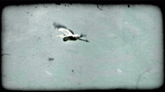 Heron flies through air. Vintage stylized video clip. Stock Footage