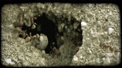 Worker ants at hole. Vintage stylized video clip. Stock Footage