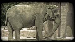 Elephant swings trunk. Vintage stylized video clip. Stock Footage