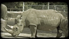 Large rhinos at zoo. Vintage stylized video clip. Stock Footage
