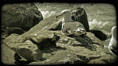 Squirrels and seagulls. Vintage stylized video clip. Stock Footage