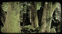 Mossy trees in forest. Vintage stylized video clip. Stock Footage