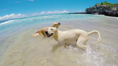 Dogs Shaking off Water at the Beach Stock Footage