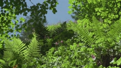 Butterfly fly in slow motion over the forest garden with ferns and herbs Stock Footage