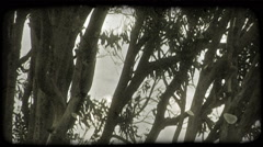 Dark trees and sky. Vintage stylized video clip. Stock Footage