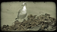 Seagull and seaweed. Vintage stylized video clip. Stock Footage