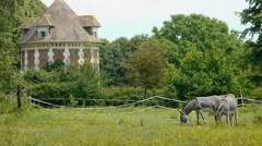 Donkeys at a french castle - stock footage