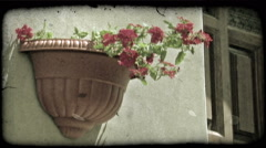 Wall Flower. Vintage stylized video clip. Stock Footage