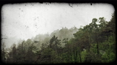 Foggy Forest 1. Vintage stylized video clip. Stock Footage