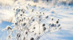 DOLLY: frozen grass in the sun Stock Footage