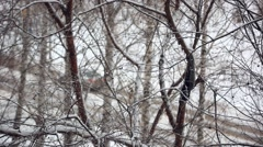 Winter park background. White snowfall bokeh. View on road with moving cars Stock Footage