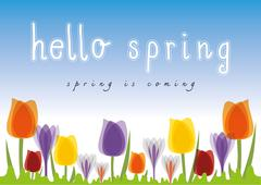 Hello Spring Tulip blue sky background - stock illustration