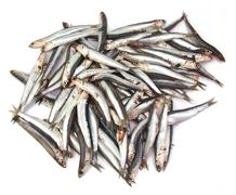 Bunch of anchovies on white background - stock photo