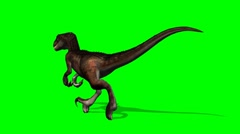 Velociraptor dinosaur runs - green screen Stock Footage