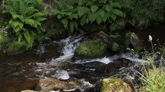 Stream flowing between rocks with authentic sound Stock Footage