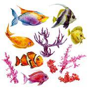 Marine set of Watercolor Vector Tropical Fish, Seaweed Coral Algae and Jellyfish - stock illustration