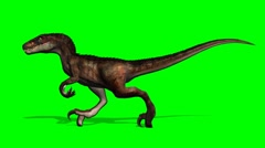 velociraptor dinosaur runs - green screen - stock footage