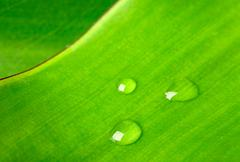 Green leaf with water droplet macro Stock Photos