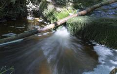 Fallen Tree in Stream - stock photo
