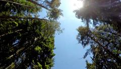 Driving pov under giant forest pine trees with sun shining. UHD 4K stock vide Stock Footage