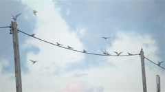ArcticTern kria birds swarm flying landing on telephone pole wire cloudy sky - stock footage
